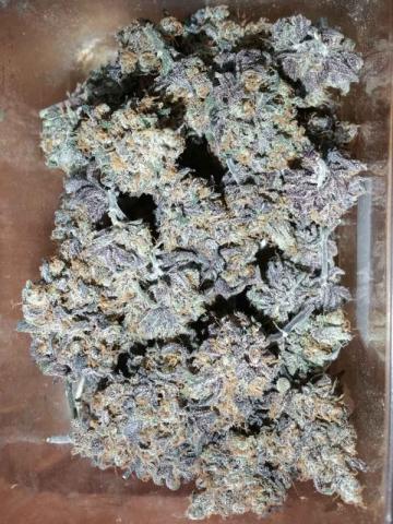 Purple Dragonfruit flower dried - JONZ Genetics